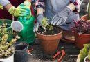 Jardinagem contra o estresse