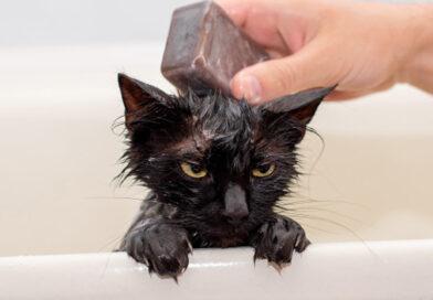 Os riscos de dar banho no pet em casa