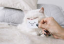 Estresse e personalidade de tutores afetam os pets? Confira o que dizem os estudos sobre o assunto!