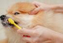 Por que escovar os dentes do seu cachorro é tão importante?