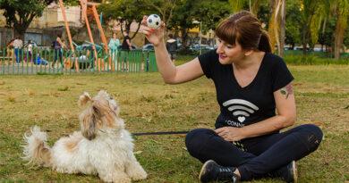 Pet sitting e consultoria comportamental: bem-estar para o seu pet e tranquilidade para você
