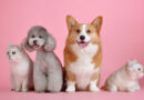 No Outubro Rosa, a veterinária Paula Amorim fala sobre o câncer de mama em cadelas e gatas