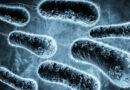 Os danos que as bactérias podem causar à sua boca