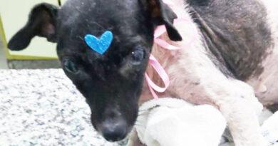 Resgate da cachorrinha Amora denota a importância de comissão da Amoran