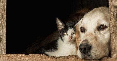 Castração gratuita de pets já pode ser agendada pela internet